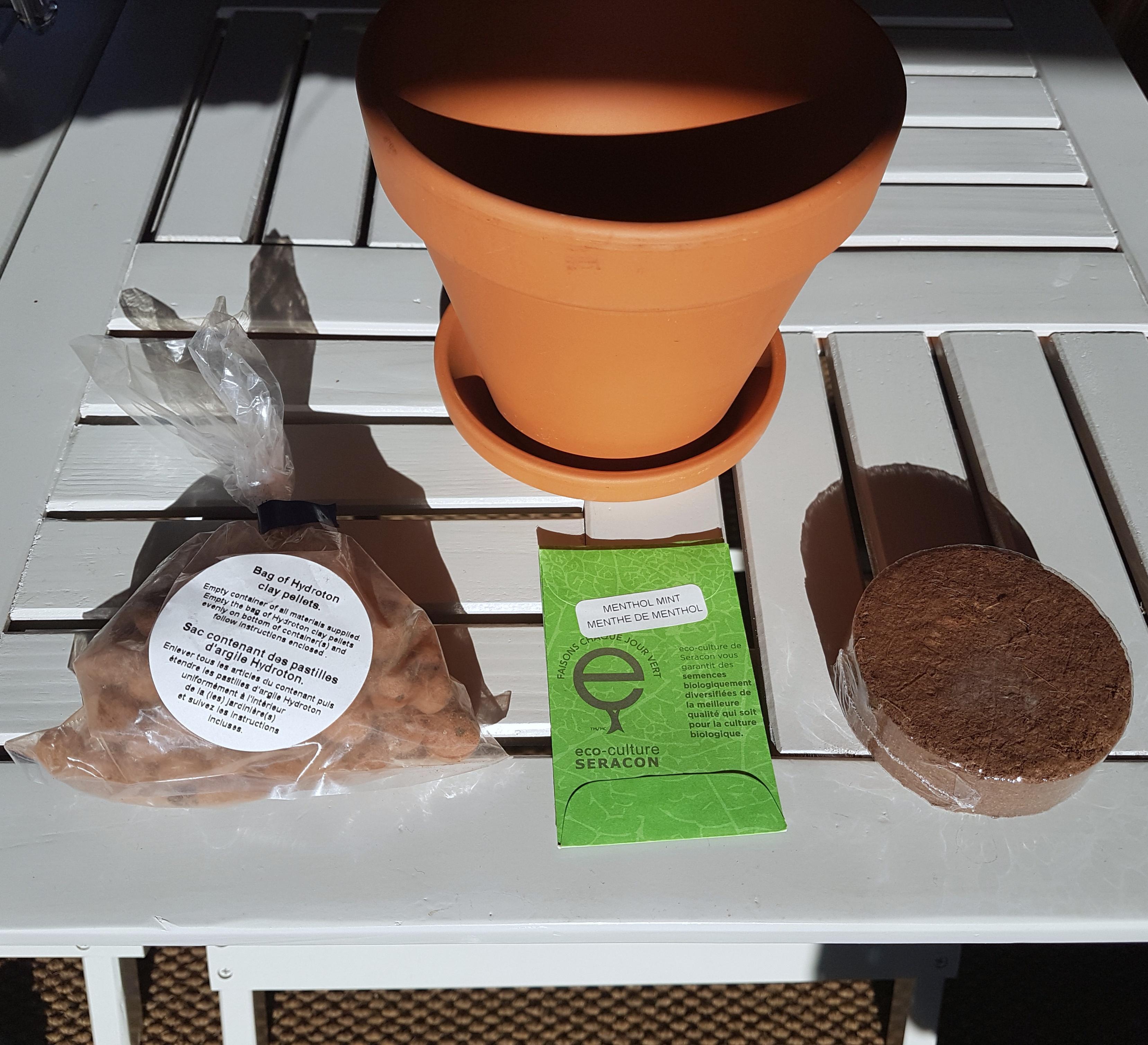 mint plant kit