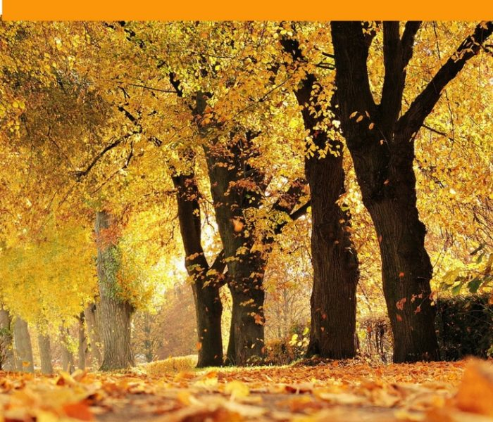5 Things to Do In The Autumn