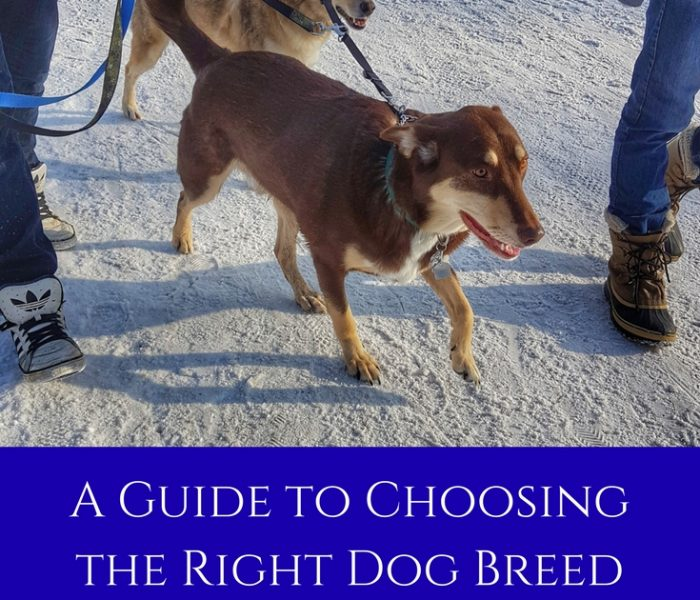 A Quick Guide to Choosing the Right Dog Breed for You
