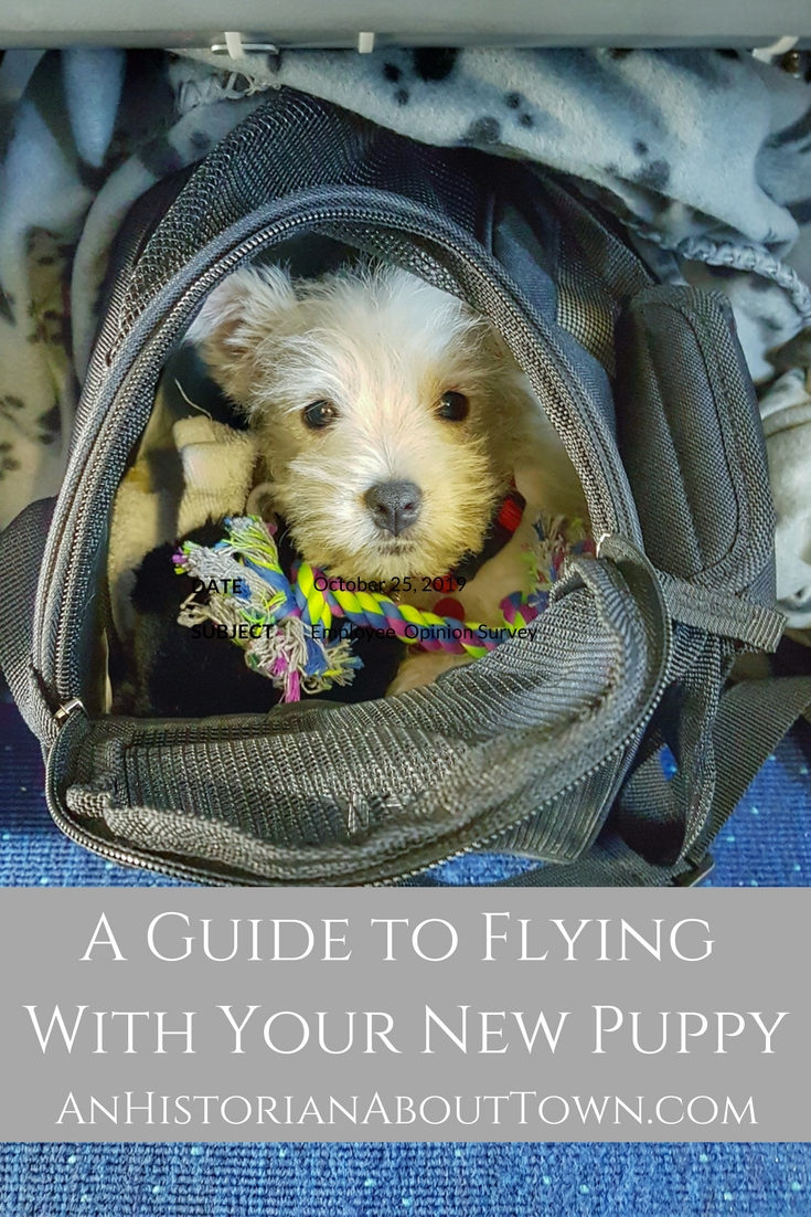 A Guide to Flying With Your New Puppy