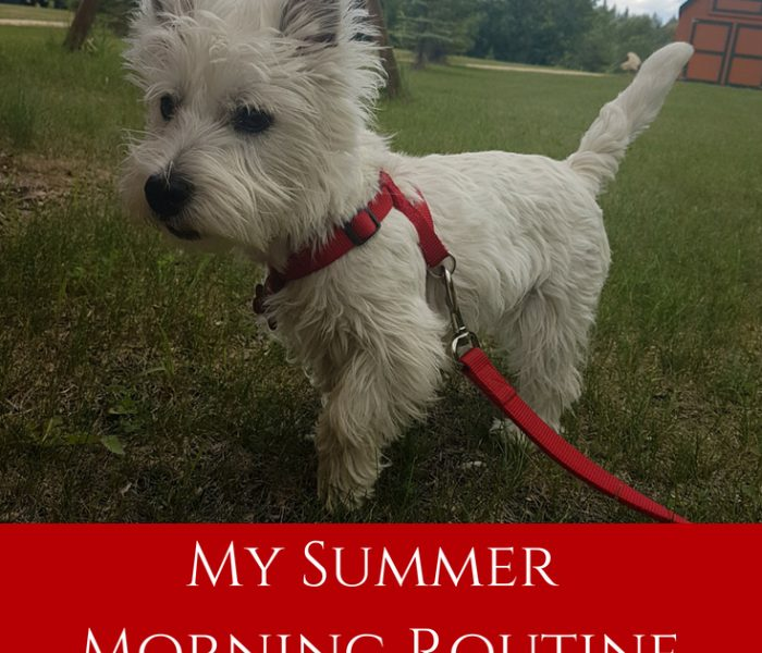 My Summer Morning Routine