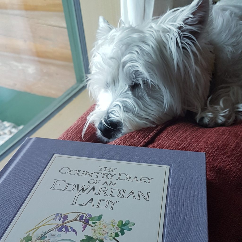 The Country Diary of an Edwardian Lady with a sleeping westie